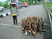 Toerisme op Java, geen toeristen dus.