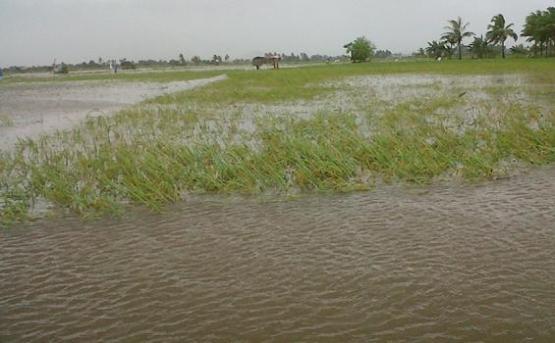 Sawah onder water, weg oogst.