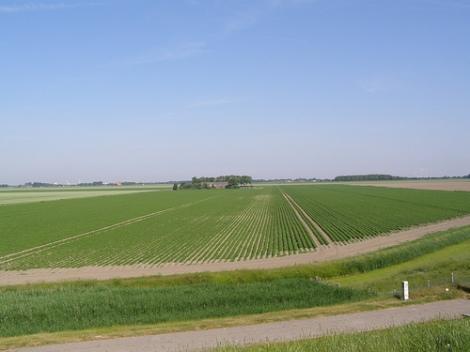 Akkerbouw in de polder in Nederland.