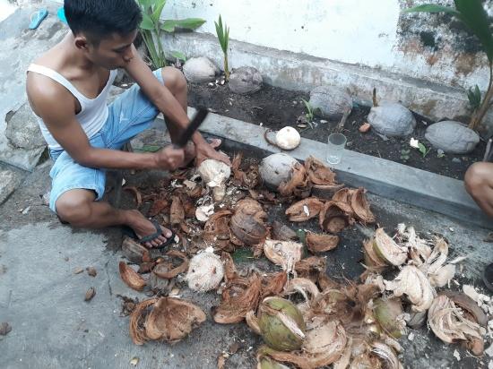 Kokosnoten van de schil ontdoen; kokosvlees wordt later geraspt